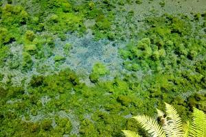 透明度高い天然水[白川水源・南阿蘇村]