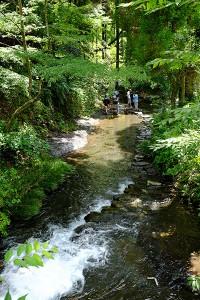 水源から流れる小河[白川水源・南阿蘇村]