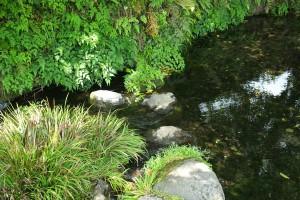 コンコンと湧き出る湧水[池の川水源]