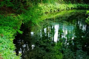 熊本地震の影響なし[白川水源]