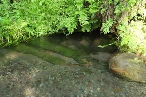 十分な湧水量の湧き水[竹崎水源]