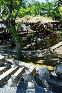 地震で倒れた塀と藤の花[阿蘇神社]
