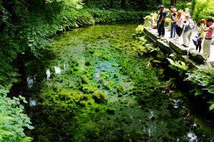 森林と湧水源と観光客[白川水源・南阿蘇村]