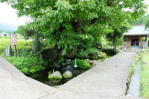 汲み場と参道は兼用[池の川水源・南阿蘇村]