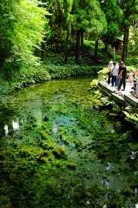 午後の源泉[白川水源・南阿蘇村]