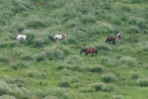 食事中の馬たち[地震復旧後の草千里ヶ浜]