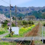 路線脇の花[見晴台・南阿蘇鉄道]