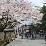 2017年4月12日現在:桜満開[阿蘇神社]