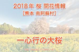 一心行の大桜 開花状況[熊本 南阿蘇村]