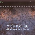 アカホヤ火山灰[大観峰・散策コース]