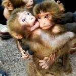 元気な小猿たち[阿蘇猿まわし劇場・南阿蘇]