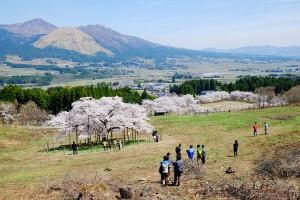阿蘇山と南郷谷を借景する景観[観音桜・南阿蘇村]