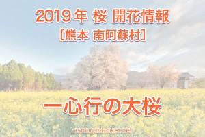 一心行の大桜 2019 開花状況[南阿蘇 桜名所]