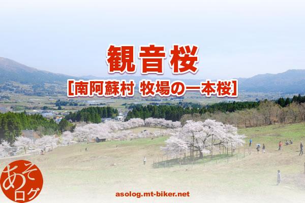 桜 開花 情報