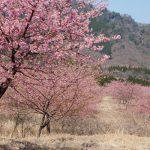 アスペクタ桜公園[南阿蘇村:桜 名所]