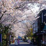 門前町商店街の桜[2020 阿蘇神社 現在状況]