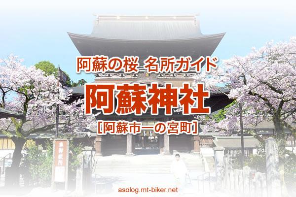 阿蘇神社 見頃[阿蘇市 桜の名所]
