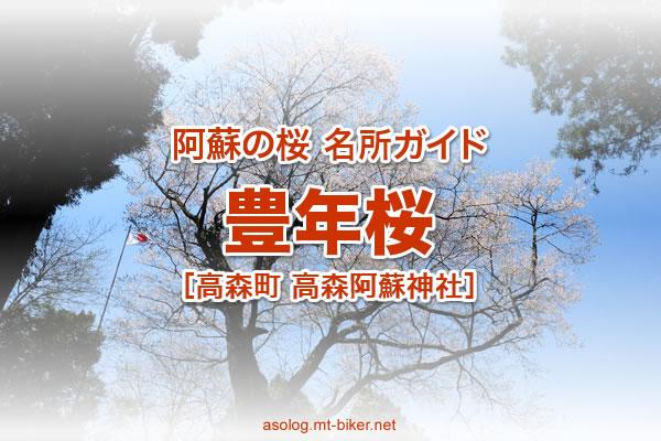 豊年桜[阿蘇 高森町 桜の名所]
