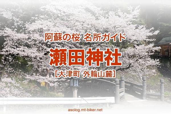 瀬田神社[熊本 大津町 桜の名所]