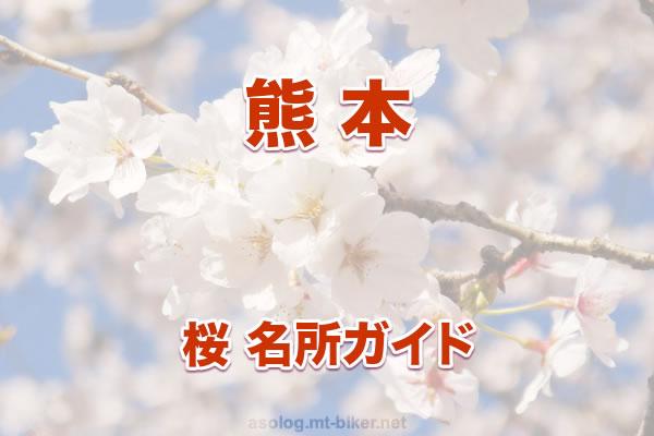 熊本[桜 花見 見どころ 場所]