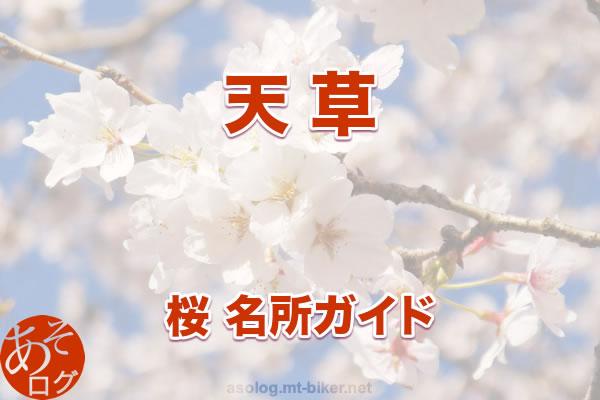 天草[桜 花見 見どころ 場所]